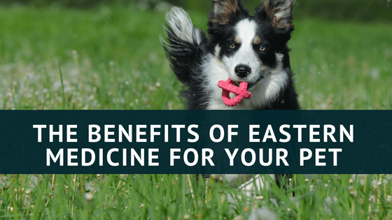 The Benefits of eastern medicine for your pet